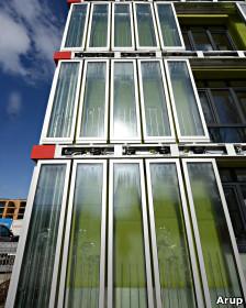 Las algas generan sombra en verano y mantienen al edificio aislado del ruido exterior.