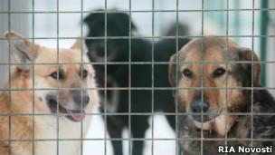 Приют для бездомных животных в Руднево