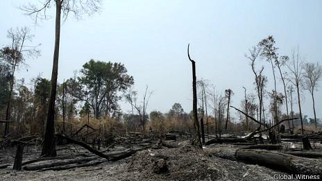 Rừng bị phá trong đồn điền cao su của Hoàng Anh Gia Lai ở Campuchia