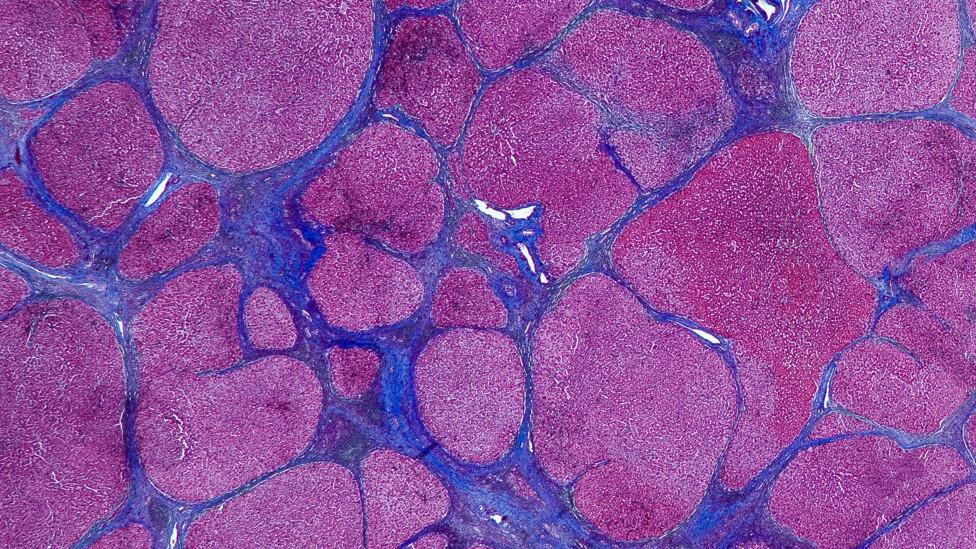 Obra americana reúne imagens de tumores e outros males cujas formas e cores se assemelham a obras de arte.
