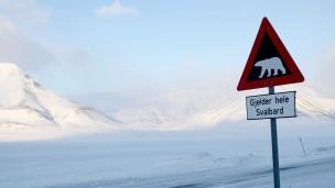 Cartel informando de la presencia de osos polares