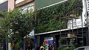 Grupo já conseguiu instalar jardins verticais na rua Augusta, região central de São Paulo