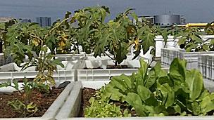 Horta já ocupa mil metros quadrados do telhado do Shopping Eldorado (BBC)