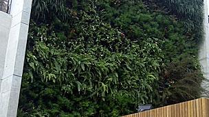 Prédio de apartamentos na Vila Madalena, onde já existe o jardim vertical (BBC)
