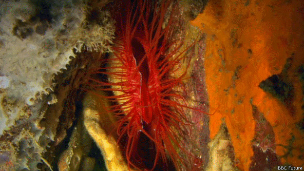 Criatura en arrecife de coral