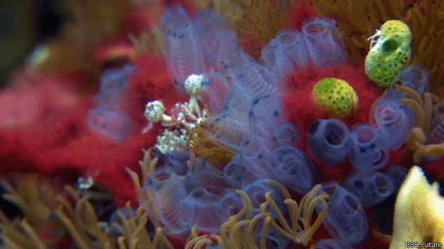 Vida en arrecife de coral