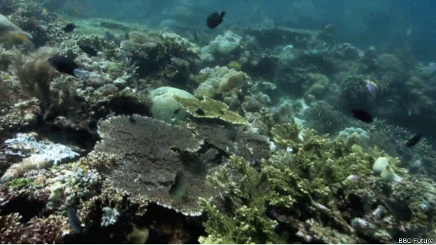 Deterioro en arrecife de coral