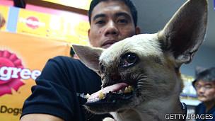 Kabang, la perra que salvó la vida de dos niñas en Filipinas