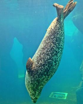 Mamífero marino en el agua