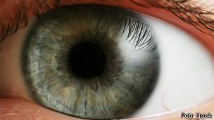 Olho humano - Petr Novák, Wikipedia