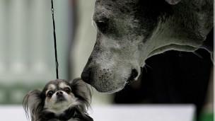 Calculadora revela idade 'real' de cães e a idade 'canina' dos donos ...