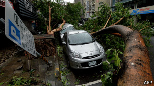 台北市一些地方不少大树被强风吹断