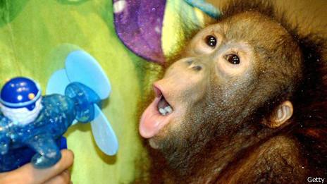 Mono con ventilador