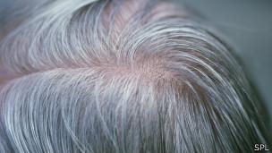 cabello canoso