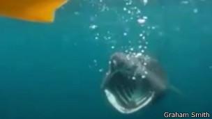Graham Smith encontra tubarão de seis metros | Imagem: Graham Smith
