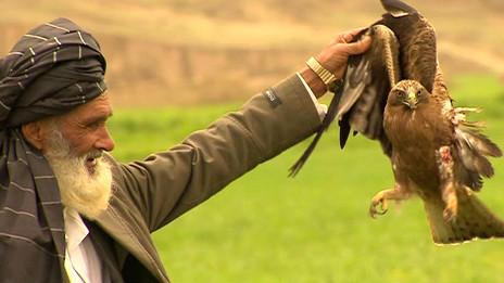 Cazador afgano