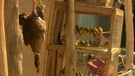Mercado de aves afgano