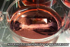 A sample of lab-grown meat in a petri dish at Maastricht University in the Netherlands