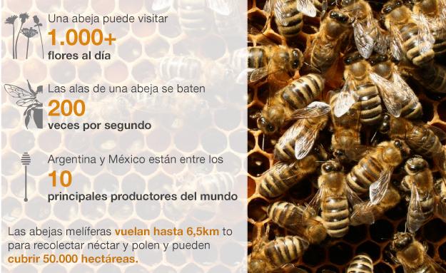 Gráfico abejas