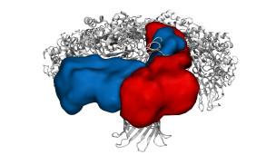 Modelo molecular del arma bacteriana