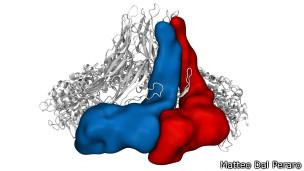 Modelo molecular del poro de proteínas