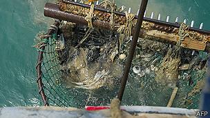 Mariscos y basura en una red de pesca en Algeciras