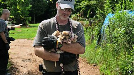 Pitbull resgatado nos EUA | Foto: AP