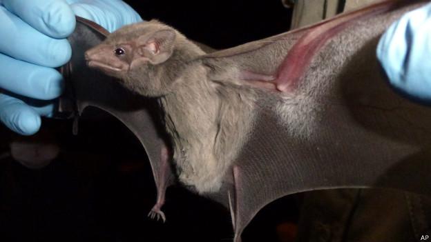 Morcego | Foto: AP