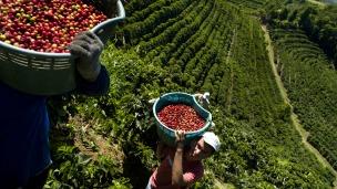 Recolectores de café en Costa Rica