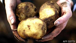 Papas recién cosechadas en las manos de un agricultor