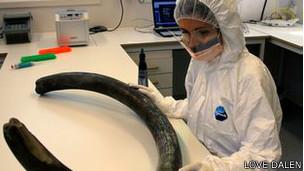 Científica con colmillo de mamut