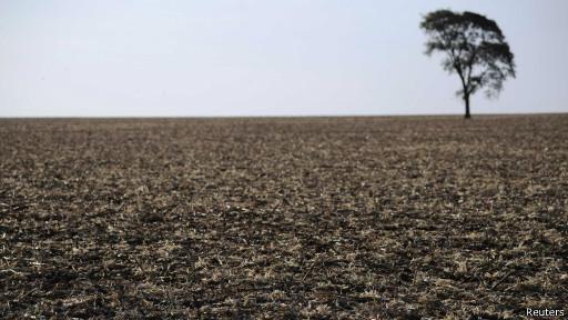 Área reivindicada por índios guarani-kaoiwá usada no plantio de cana no Mato Grosso do Sul (Reuters)