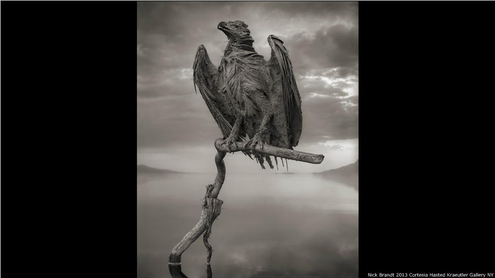Águila pescadora petrificada, fotografía de Nick Brandt/Cortesía de Hasted Kraeutler Gallery, NY