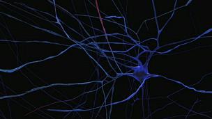 Imagem: Human Brain Project (BBC)