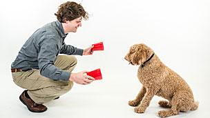 Brian Hare e o teste de inteligência para cães (Foto: Dognition)