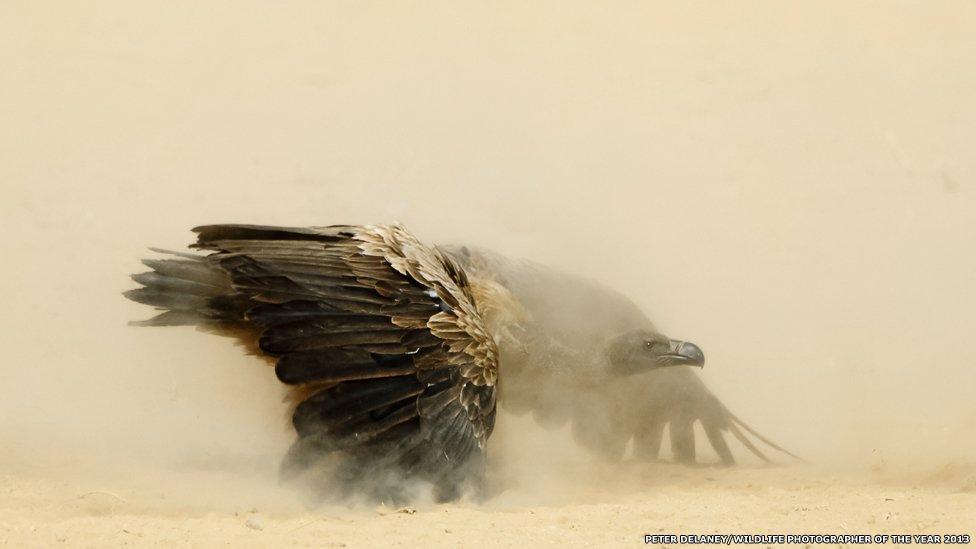 Fotógrafos flagraram desde abutres disputando carcaça no deserto a ave em teia de aranha