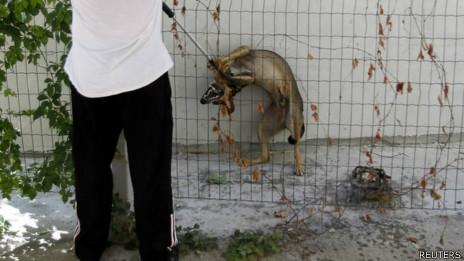 Cães vira-lata na Romênia. Foto: Reuters