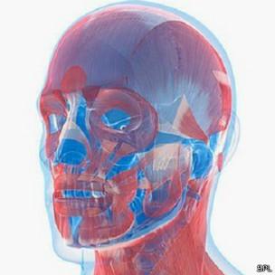 मानव चेहरा