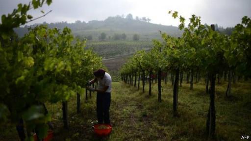 vinícola| AFP