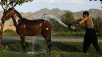 Một người Afghaninstan đang tắm cho ngựa. Ảnh: Mohammad Ismail/ Reuters