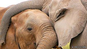 Dos elefantes frotándose