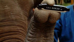 Elefante con armónica