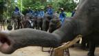 Elefantes músicos