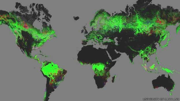 Mapa interativo online mostra evolução de desmatamento no mundo