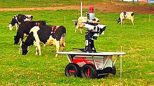 Robot Rover creado en Australia para arrear vacas lecheras