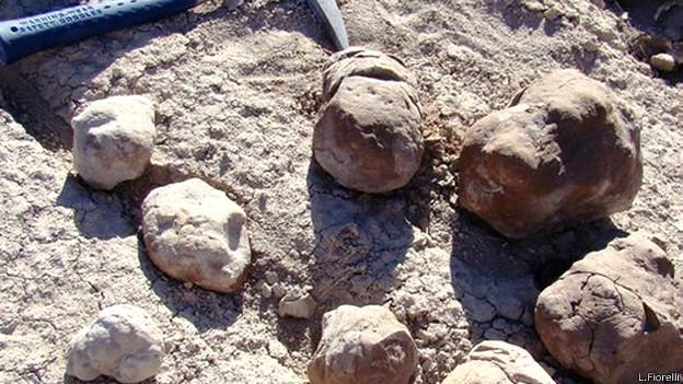 Excrementos fosilizados