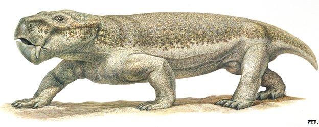 Dinodontosaurus