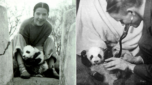 Harkness, panda y doctor