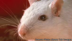 131202015644_mouse_304x171_sciencephotol