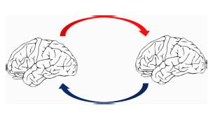 Gráfico representando dos cerebros que interactúan